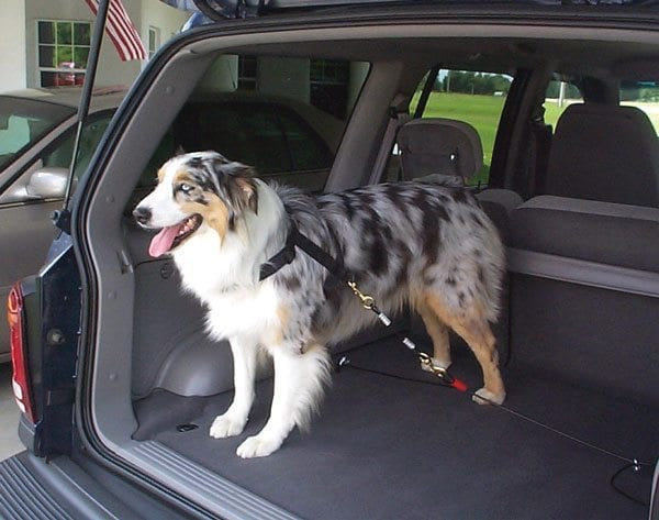 Hamilton Safety Rider Pet Restraint for SUVS & Trucks