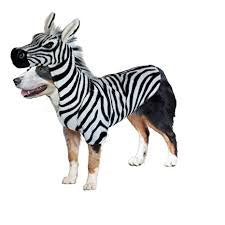 Zebra Halloween Costumes for Dogs