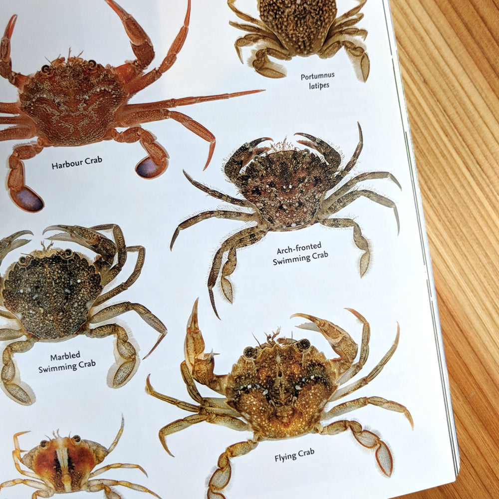 Complete Guide To British Coastal Wildlife - Collins