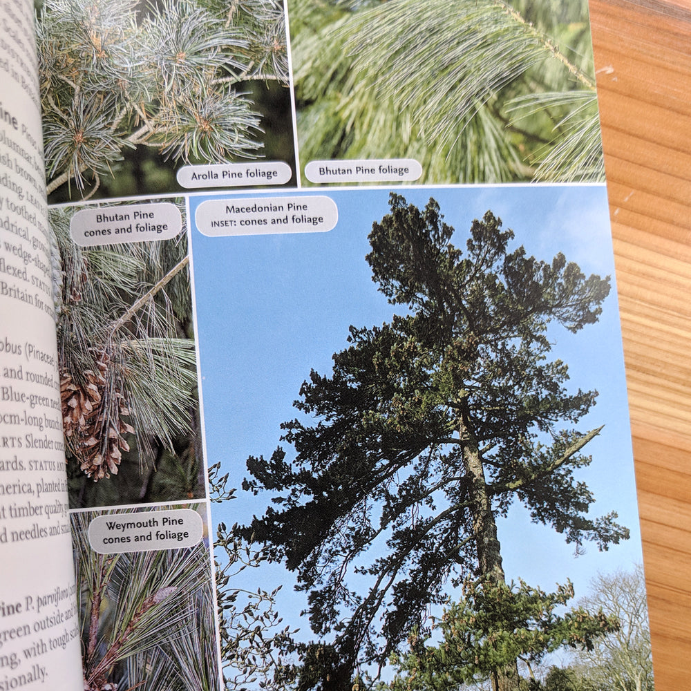 Complete Guide To British Trees - Collins
