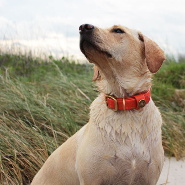 Water Dog Collar - Orange