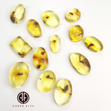 Lemon Amber Free Shape Cabochon With Insects