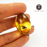 Natural Amber Olive Shape Stone With Insects