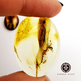 Natural Amber Free Shape Cabochons With Insects