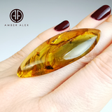 Natural Amber Marquise Cabochon With Insects