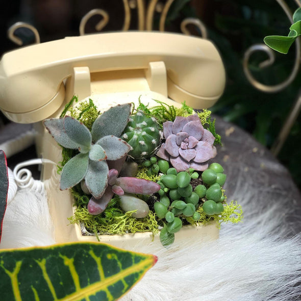 Succulents planted in a vintage phone