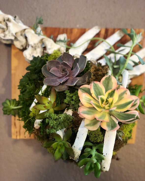 articulated deer ribcage with live succulents