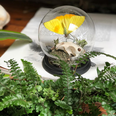 muskrat in glass globe