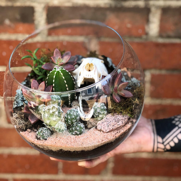 terrarium with succulents and fox skull. Skulls with living plants.