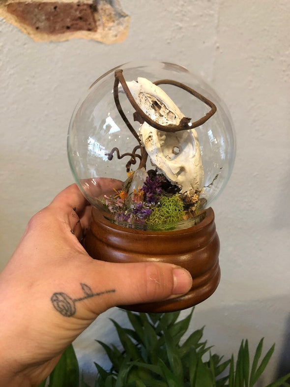 rabbit skull curiosity in a glass globe.