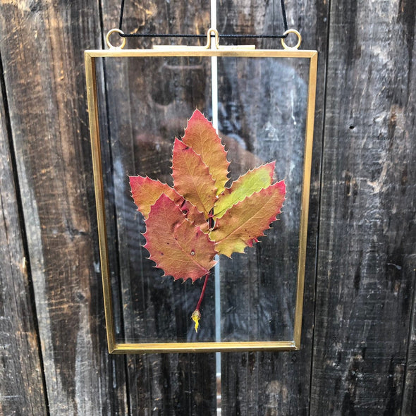 A red leaf in a glass frame. Pressed Flowers.
