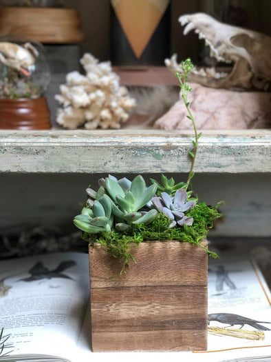 Succulents in a Box
