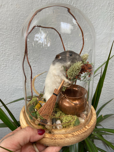 Taxidermy Magic Mouse