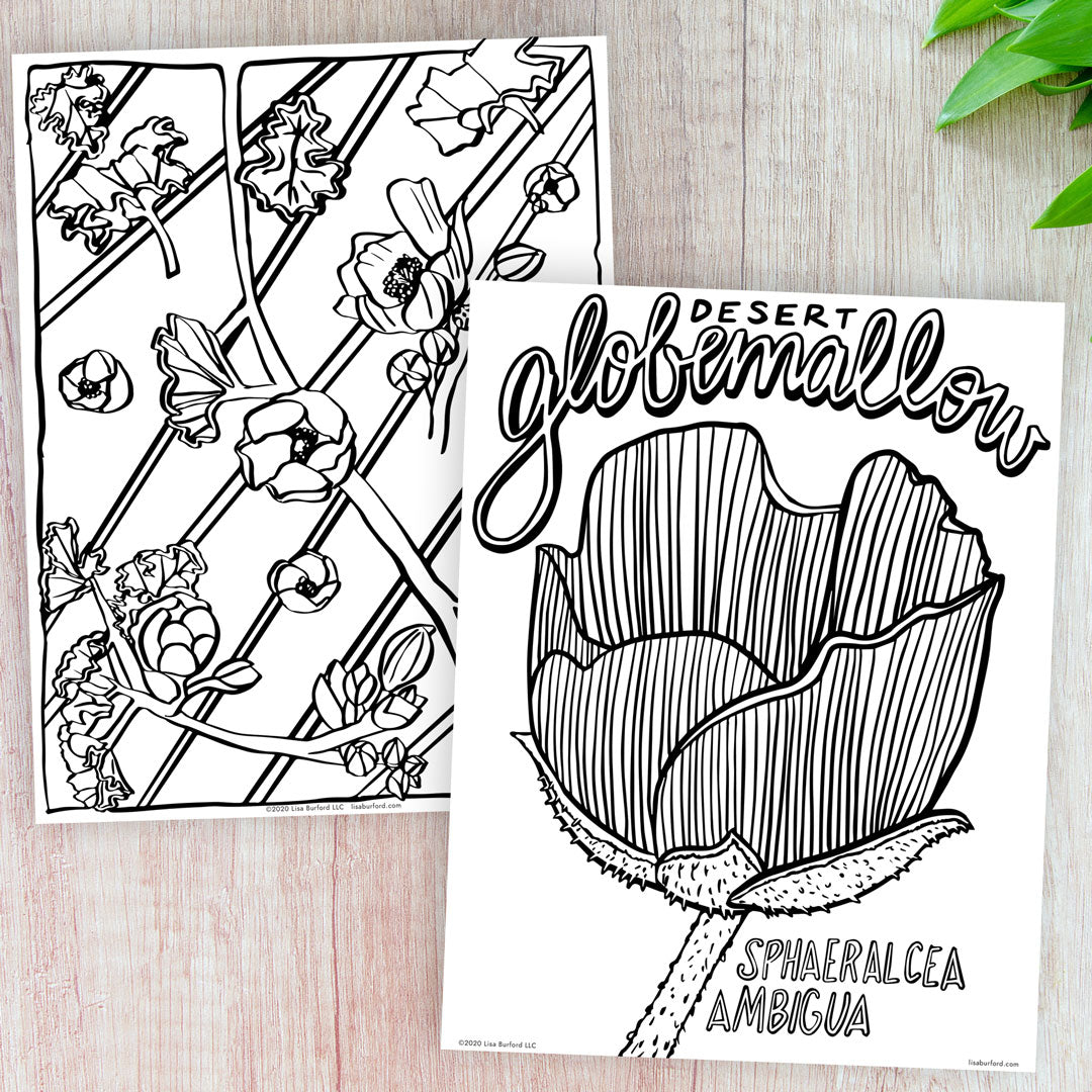 Desert Globemallow Coloring Pages