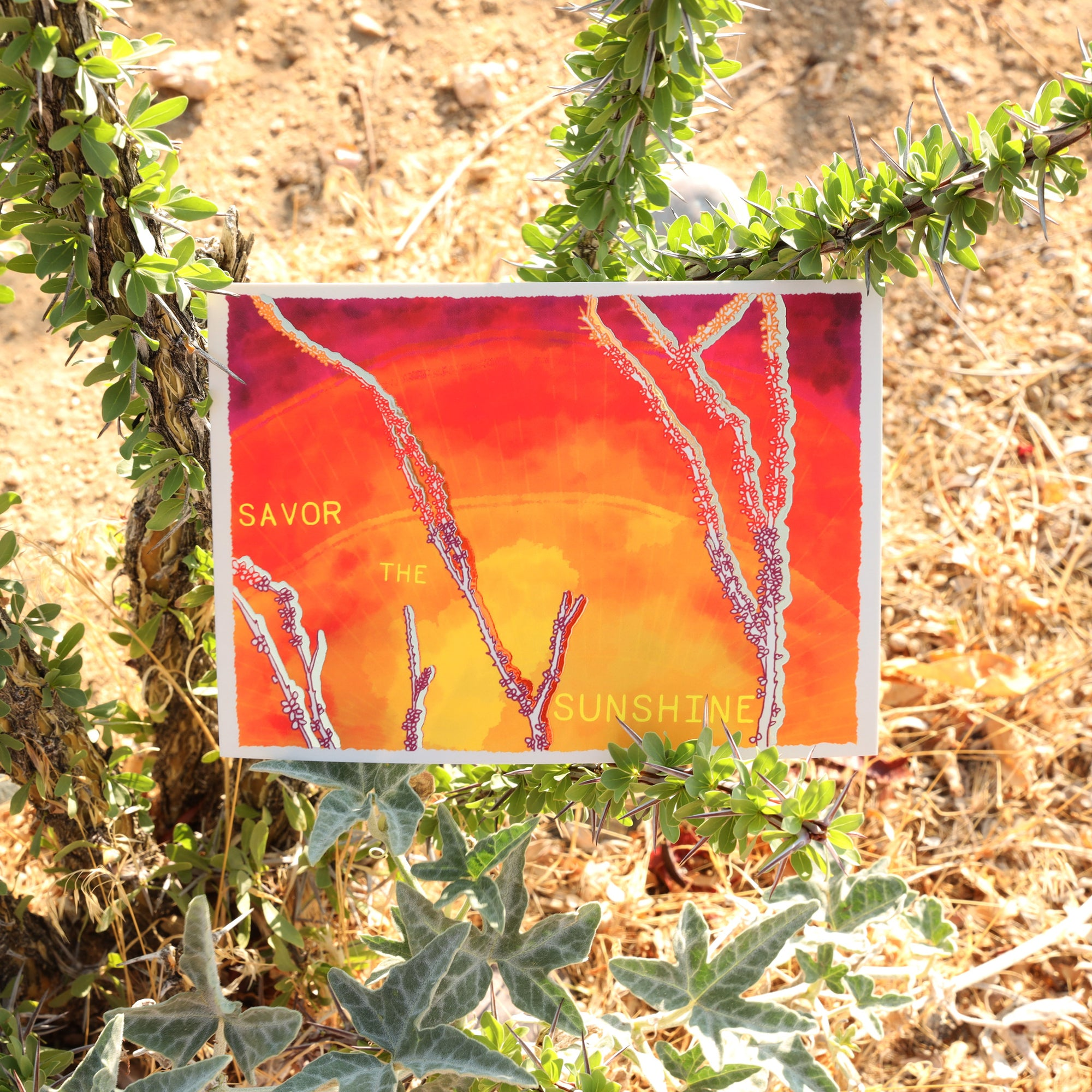 Savor the Sunshine Print on ocotillo branches
