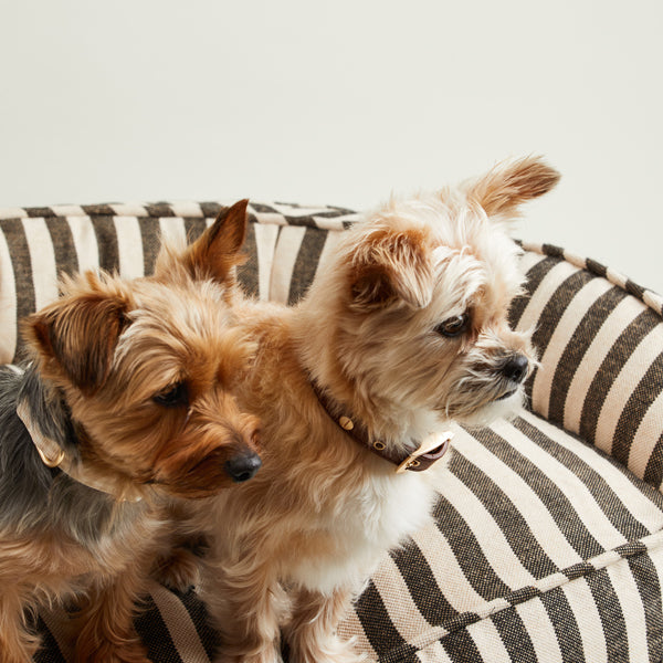 Two dogs sitting on Vintage Stripe Lounger bed.