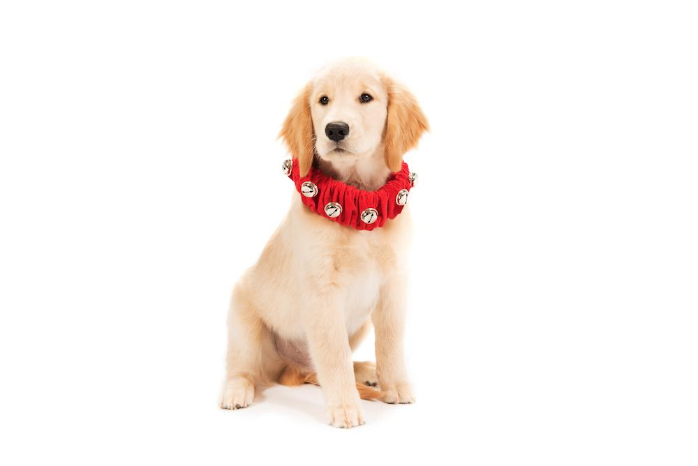 Jingle Bell Collar