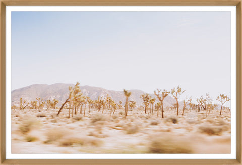Joshua Tree Framed Photo by Leftbank Art
