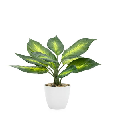 "Villa 4.5"" Diameter Faux Potted 11"" Plant in Dieffenbachia design by Torre & Tagus"