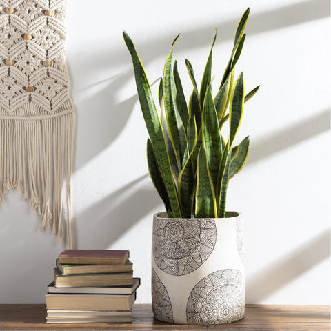 Argil AGI-001 Tall Planter in Ivory by Surya