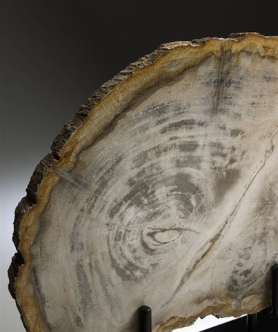 Medium Petrified Wood Sculptural design by Cyan Design