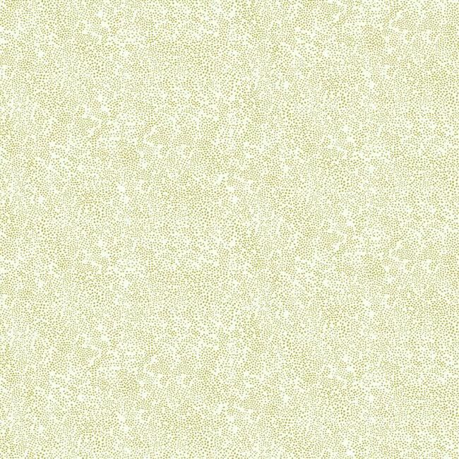 Champagne Dots Wallpaper in Gold and White from the Rifle Paper Co. Collection by York Wallcoverings