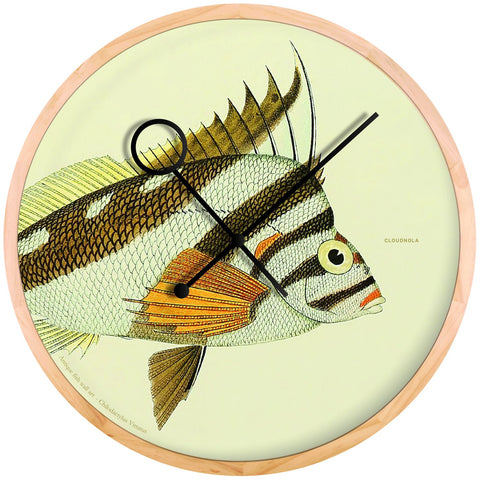 Chilodactylus Vittatus Wall Clock