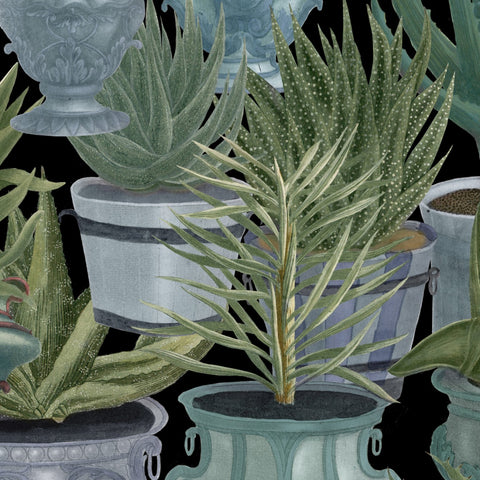 Echeveria Wallpaper in Green and Black from the Rediscovered Paradise Collection by Mind the Gap
