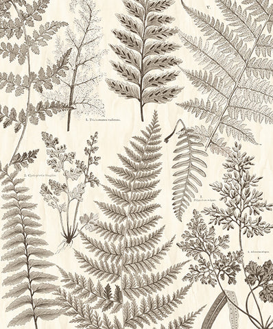 Herbarium Black Wall Mural by Eijffinger for Brewster Home Fashions