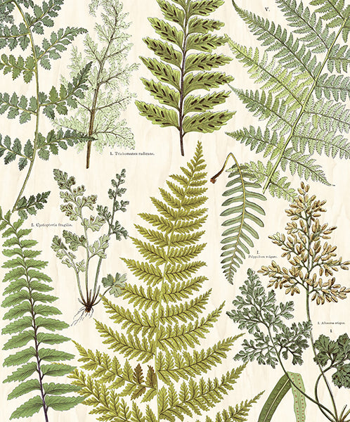 Herbarium Green Wall Mural by Eijffinger for Brewster Home Fashions