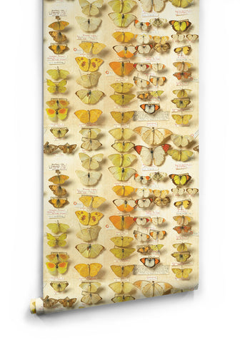 Lepidoptera Wallpaper from the Erstwhile Collection by Milton & King