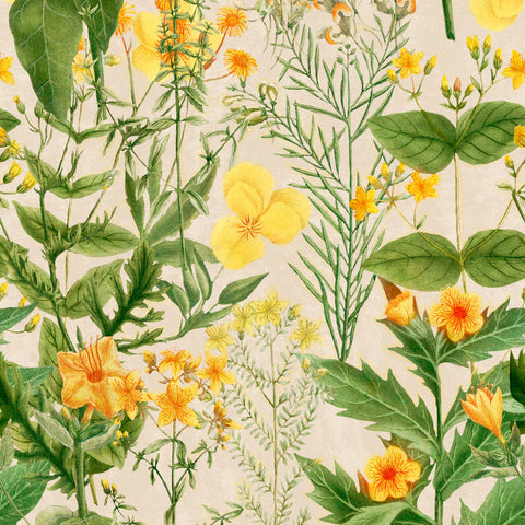 Mimulus Wallpaper in Green, Taupe, and Yellow from the Florilegium Collection by Mind the Gap