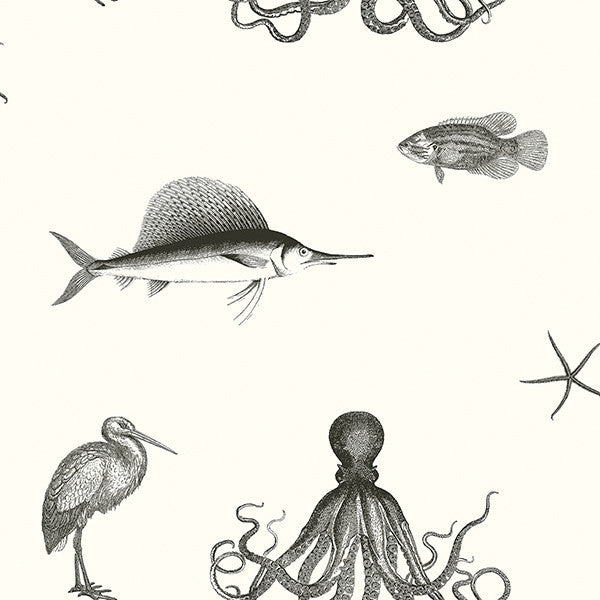 Sample Oceania Black and White Sea Creature Wallpaper from the Seaside Living Collection by Brewster Home Fashions