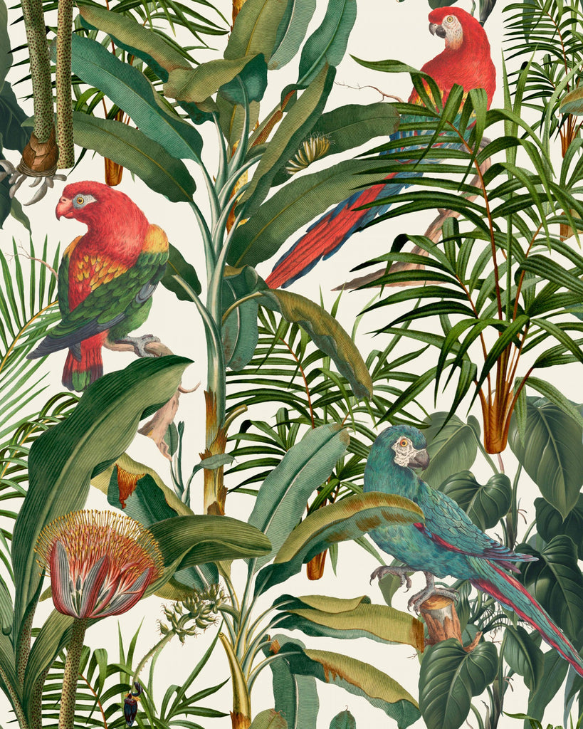 Parrots of Brazil Wallpaper from the Wallpaper Compendium Collection by Mind the Gap