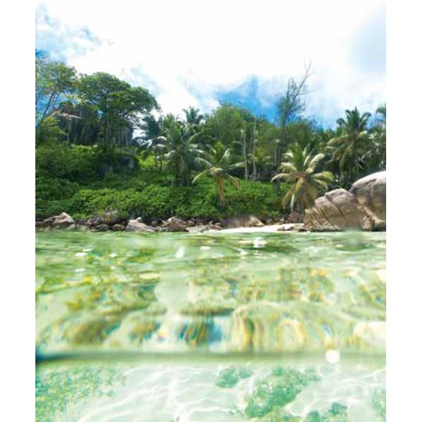 Playa Con Palmeras Green Island Cove Wall Mural by Eijffinger for Brewster Home Fashions