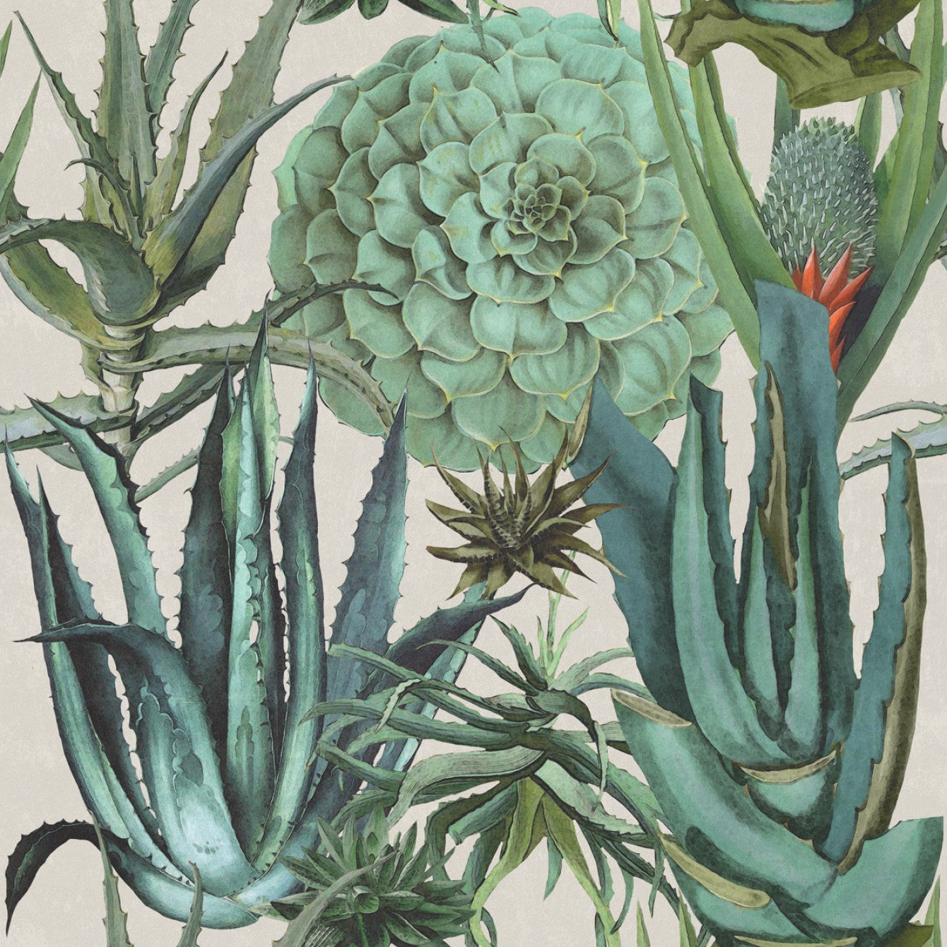 Succulents Wallpaper In Taupe And Green From The Rediscovered Paradise Burke Decor
