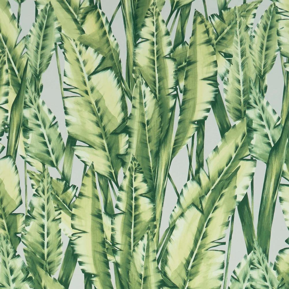 Tiger Leaf Wallpaper In Green From The Folium Collection By