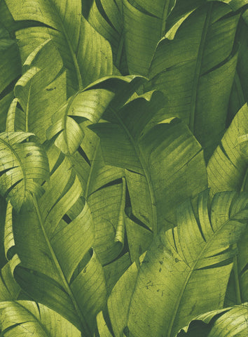 Tropical Banana Leaf Peel-and-Stick Wallpaper in Green by NextWall