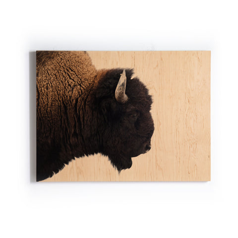 American Bison Wall Art in Various Styles