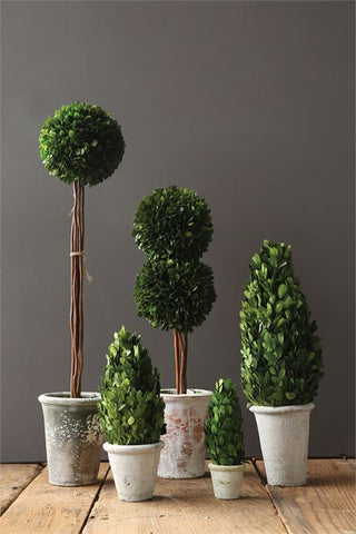 Preserved Boxwood Cone Topiary in Clay Pot by BD Edition