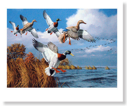 Mallards by David Maass - Sporting Classics Store