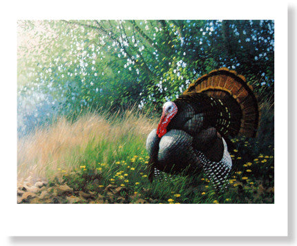 Wild Turkey by Michael Sieve