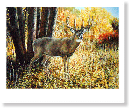Whitetail Deer by Ron Van Gilder - Sporting Classics Store