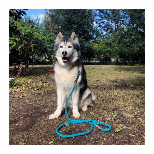 FOUND MY ANIMAL TEAL UP-CYCLED ROPE LEASH - ADJUSTABLE