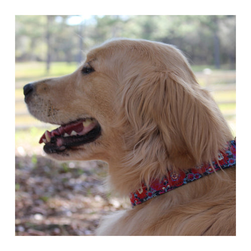 "LILLYANN GRAND FLORAL 1.5"" DOG COLLAR"