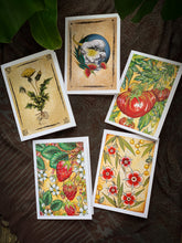 Load image into Gallery viewer, Botanical Greeting Card Set by Red Du Monde