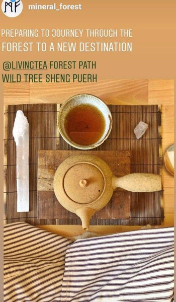 Forest Path - Wild Tree Sheng Puerh 1990's - 2 oz