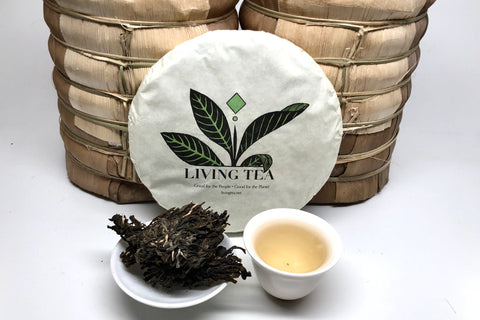 Wisdom of Youth - Big Snow Mountain, Lincang, Yunnan 2019 -2 oz, 240 g. Cake