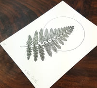 Fern Limited Edition Print