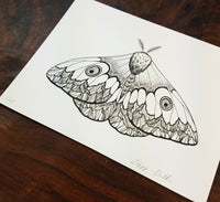 Moth Limited Edition Print